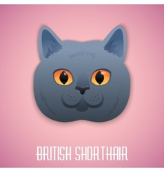 ritish Shorthair blue cat with orange eyes on pink vector image