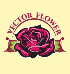 with color rose and vector image vector image