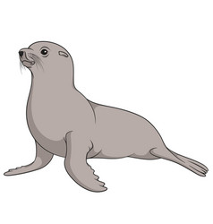 color with fur seal isolated object vector image