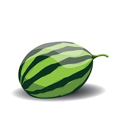 Whole watermelon vector image