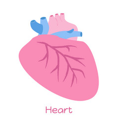 heart in flat style viscera icon internal organs vector image