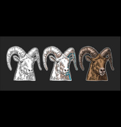 goat head on white background vector image vector image