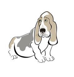 Dog basset haund vector