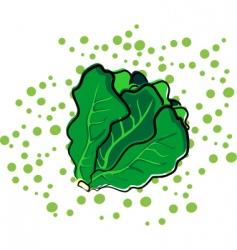leaf lettuce vector image