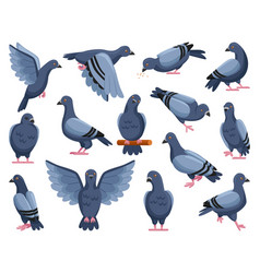 Pigeon peace cartoon on vector