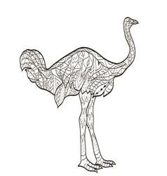 Coloring ostrich bird for adults vector
