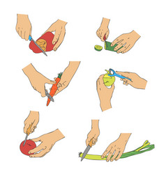 cooking hands with knife cutting vegetables vector image