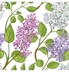 Seamless pattern with lilacs vector image