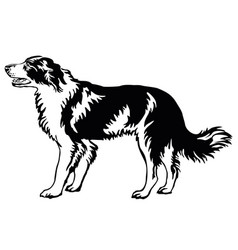 Decorative standing portrait of dog border collie vector