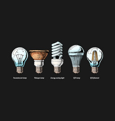 evolution set light bulb vector image
