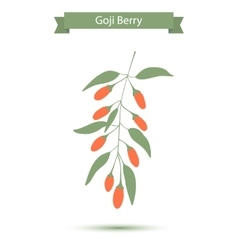 Goji berries on a branch vector