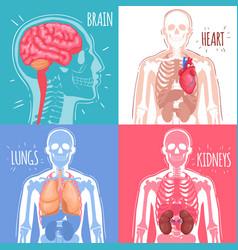 Human internal organs design concept vector