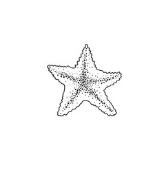 starfish sketch drawing icon summer themed vector image