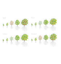 Tree growth stages apple peach and lemon vector