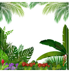 tropical jungle on white background vector image