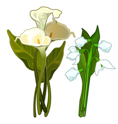 White calla and snowdrops bouquet of flowers vector