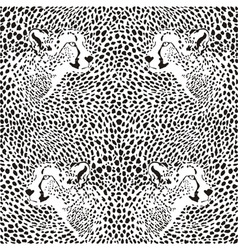 cheetahs background vector image