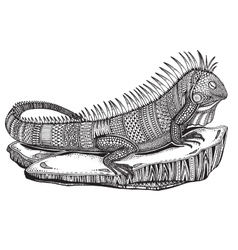 Hand drawn graphic ornate iguana on a stone vector