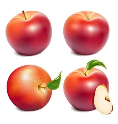 Red ripe apples vector