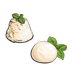 Sketch mozzarella and blue cheese vector