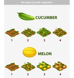 Stage of growth vegetables Cucumber and melon vector