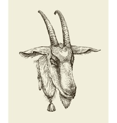 Hand drawn goat Sketch a farm animal vector image vector image