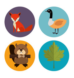 Canadian culture group of animals vector