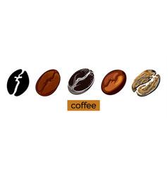 Coffee beans 5 vector