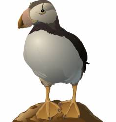 puffin vector image