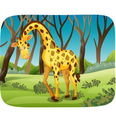 a giraffe in the forest vector image