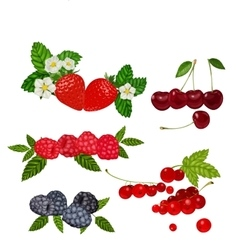 Berries Set Strawberry vector
