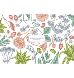 Floral design with pastel aloe calendula lily of vector