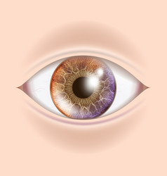 Human eye optometrist check organ test vector