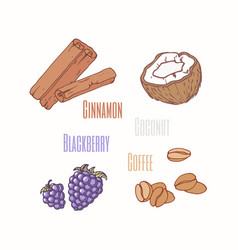 sweets - blackberry cinnamon coconut and coffee vector image