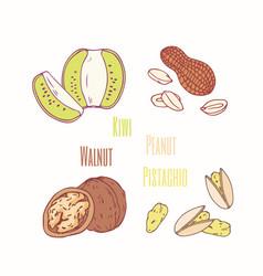 ssweet toppings kiwi peanut walnut and pistachio vector image