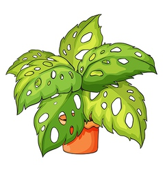 A plant and a pot vector image vector image
