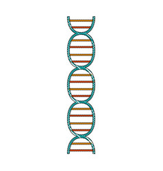 isolated dna design vector image
