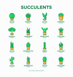 Set cactus and succelents in pots thin line vector