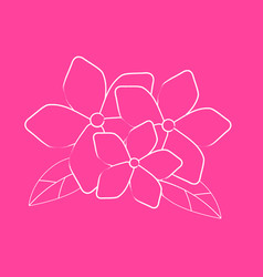 Hand draw brush flower on pink background vector