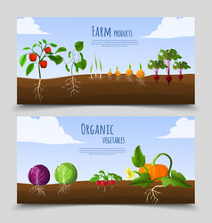 Healthy food horizontal banners vector