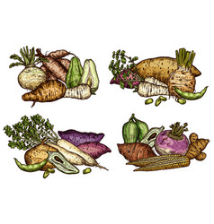 Fresh farm vegetables and exotic beans sketches vector