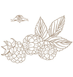 outline hand drawn raspberry flat style thin line vector image