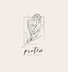 Protea logo and flowers hand drawn wedding herb vector