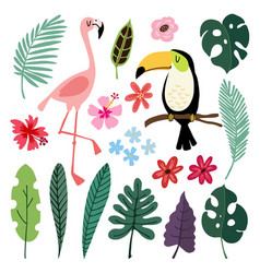summer tropical graphic elements toucan and vector image