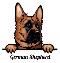 head german shepherd dog - dog breed color image vector image