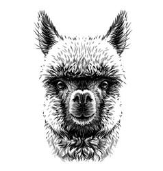 Alpaca llama portrait hand-drawn sketch vector