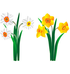 Set beautiful yellow and white bouquets narc vector