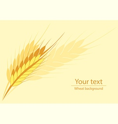 Wheat horyzontal background vector image