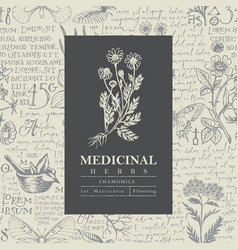 Beautiful label for a medicinal chamomile vector