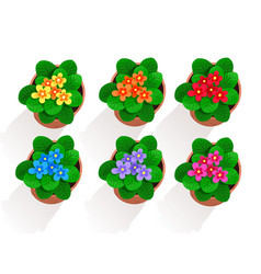 collection flowers in pot vector image